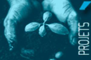 mains qui tiennent une plante