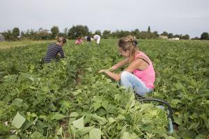 ouvriers dans le champs